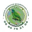 AMAZONA (Association des Mateurs Amicaux des Z'Oiseaux et de la Nature aux Antilles)